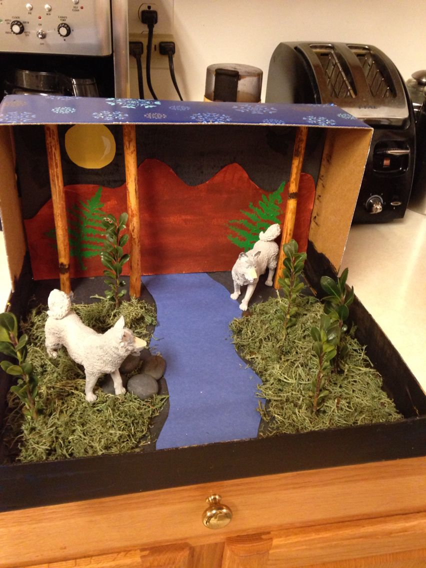 Grey Wolf Diorama  School Projects  School Projects -3369