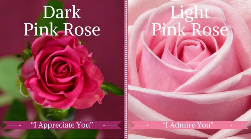 Funeral Flower Meanings Dark Pink Rose Meaning Light Roses Which Mean Graude And Reciation