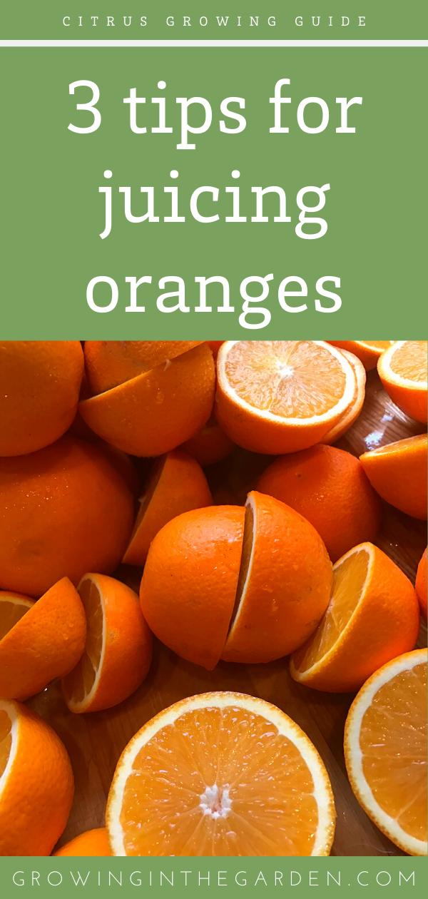 19318bf32ac543e139bb3f158acdce6d - How To Get The Most Juice Out Of Oranges