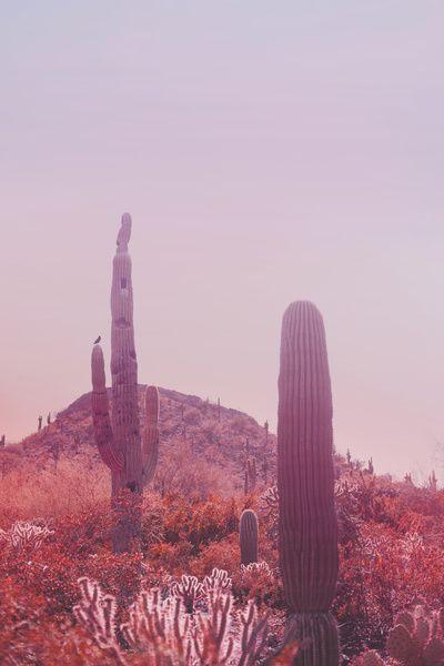 Pink Desert Desert Landscape Art Desert Landscaping Desert Dream