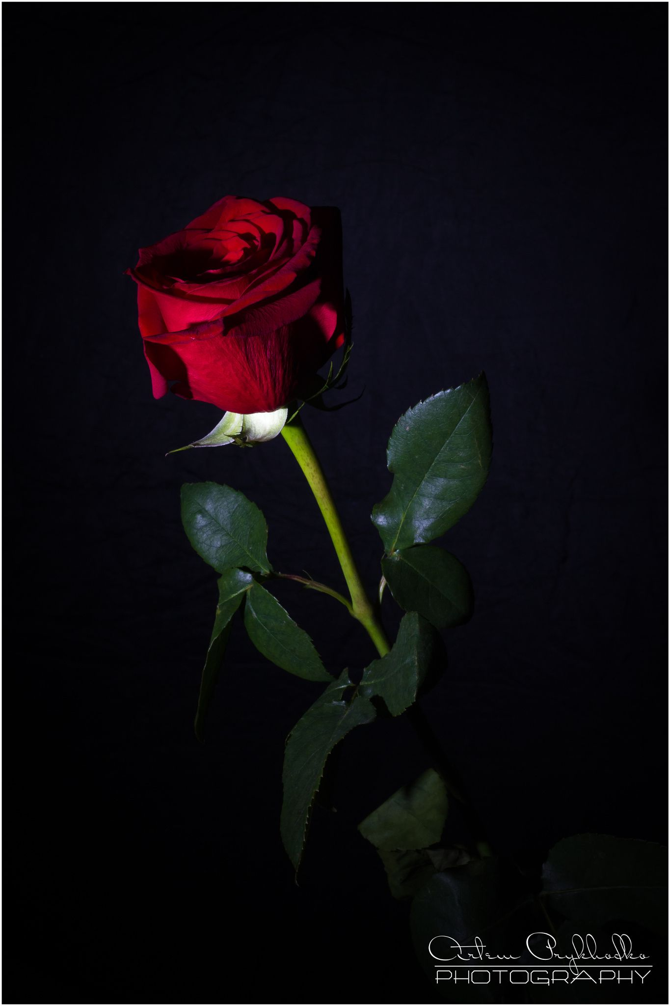 Pin By Slgudiel On Roses Dark Red Roses Beautiful Photography Nature Beautiful Red Roses