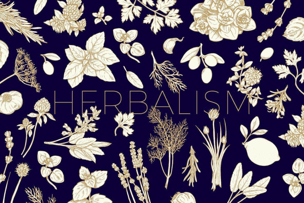 Herbalism herbalism illustration drawings
