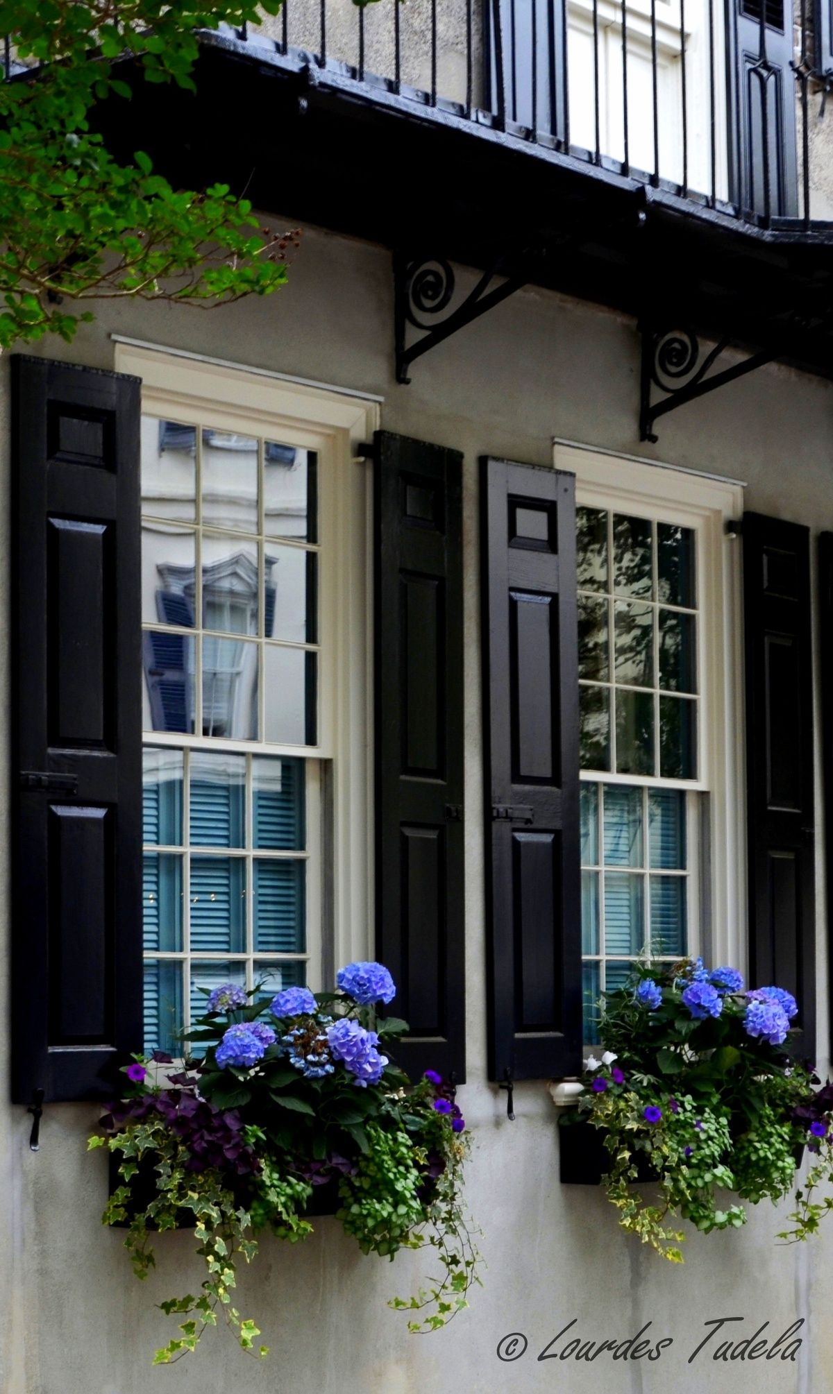 Black shutters and flower boxes etty