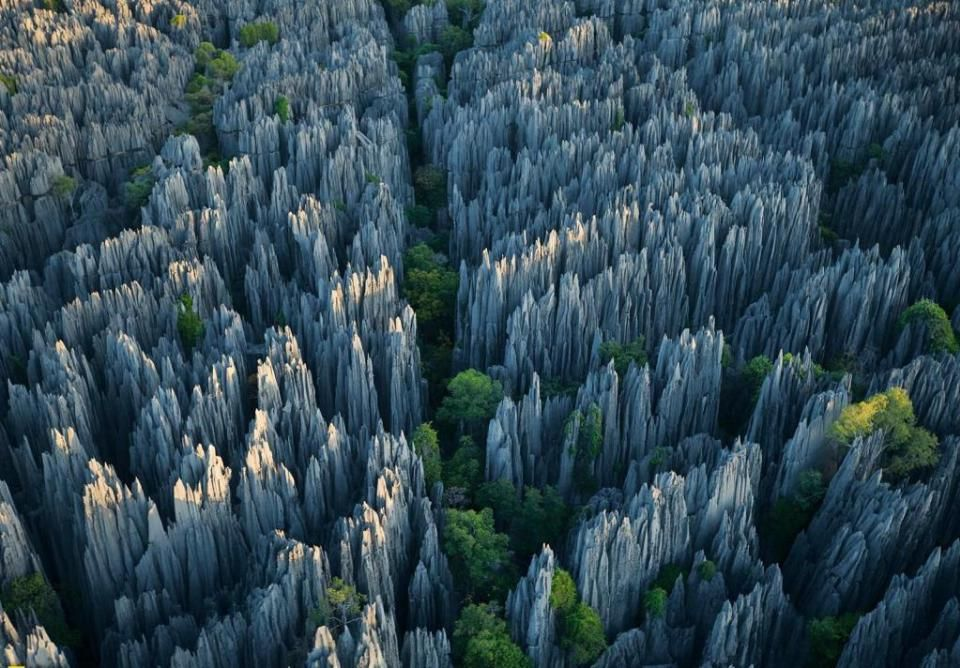 Tsingy de Bemaraha National Park, Malaky region, Madagascar