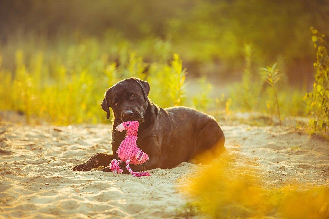 Trendiges Spieltier Von Sabro Flamingo Filip Mit Fussen Aus Seil Quietschie Sabro Hunde Hundestrand Tiere