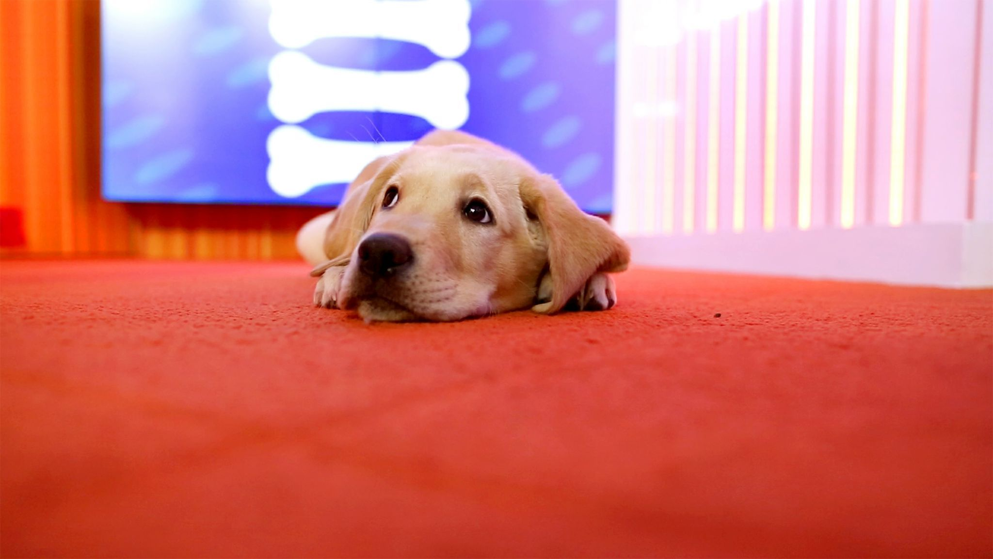 Celebrate Wrangler Wednesday with a puppy live stream