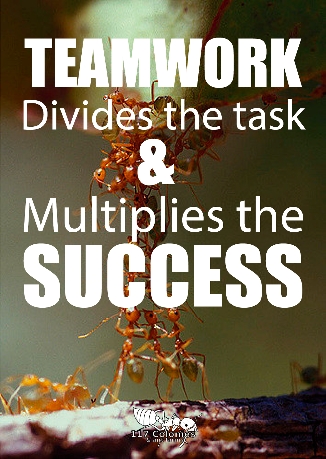 Teamwork divides the task & Multiplies Success. Ants