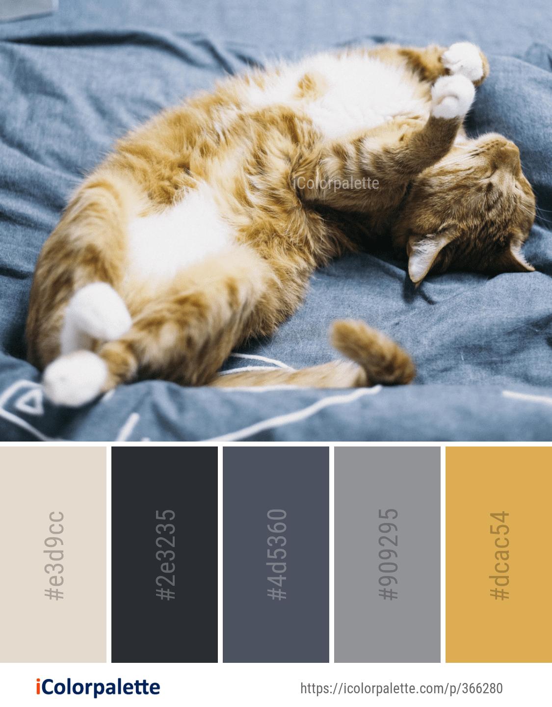 Image Color Palette Ideas In