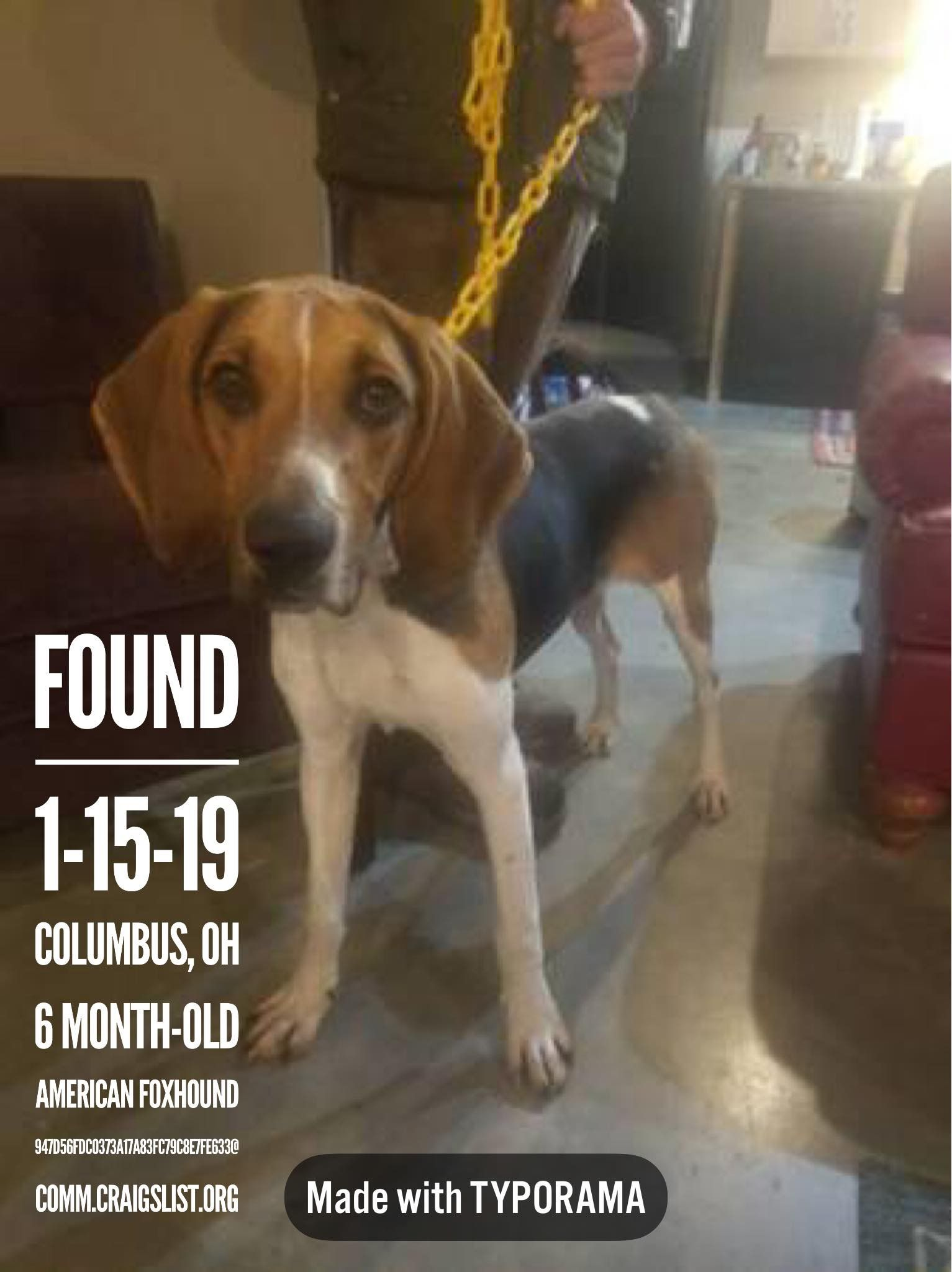 Founddog 1 15 19 Columbus Oh 6 Month Old Americanfoxhound 947d56fdc0373a17a83fc79c8e7fe633 Comm Cra Losing A Dog American Foxhound The Fox And The Hound
