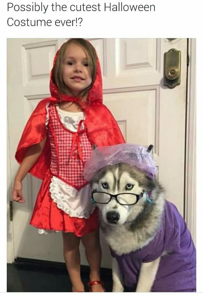 Iu0027m sure thatu0027s what the dog is thinking too. Cute Dog Halloween CostumesGirl ...  sc 1 st  Pinterest & Iu0027m sure thatu0027s what the dog is thinking too | Naughty puppies ...