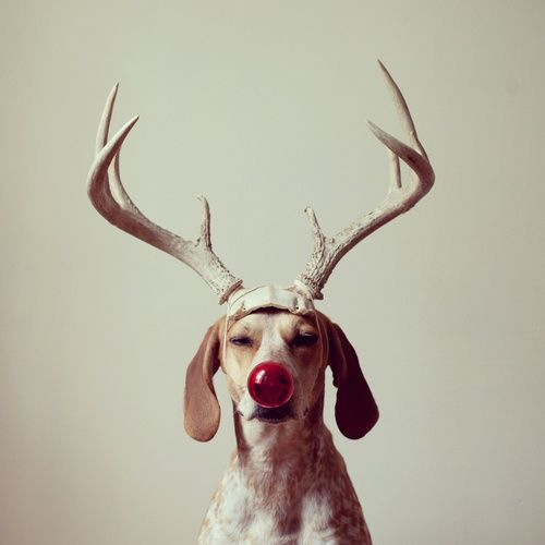 red nosed