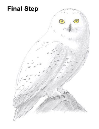 How To Draw A Snowy Owl Owls Drawing Owl Sketch Snowy Owl Tattoo