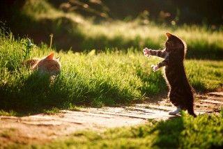 kitttyyycats :)