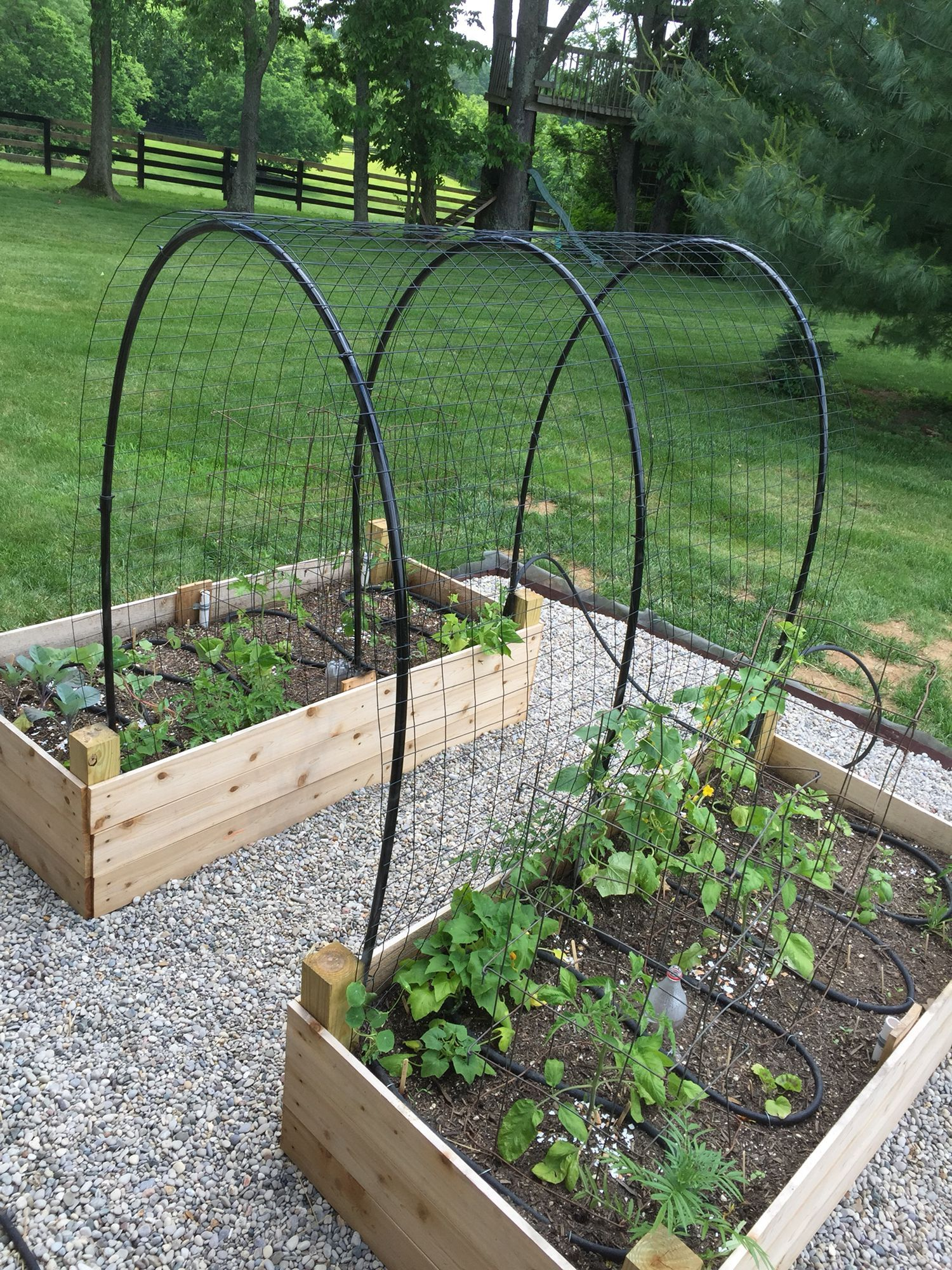 Raised Cedar Bed Planters With Pvc Pipe Trellis And Soaker
