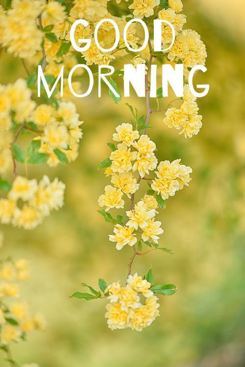 34 good morning quotes to make your day yellow flowers flowers good morning card with yellow flowers mightylinksfo