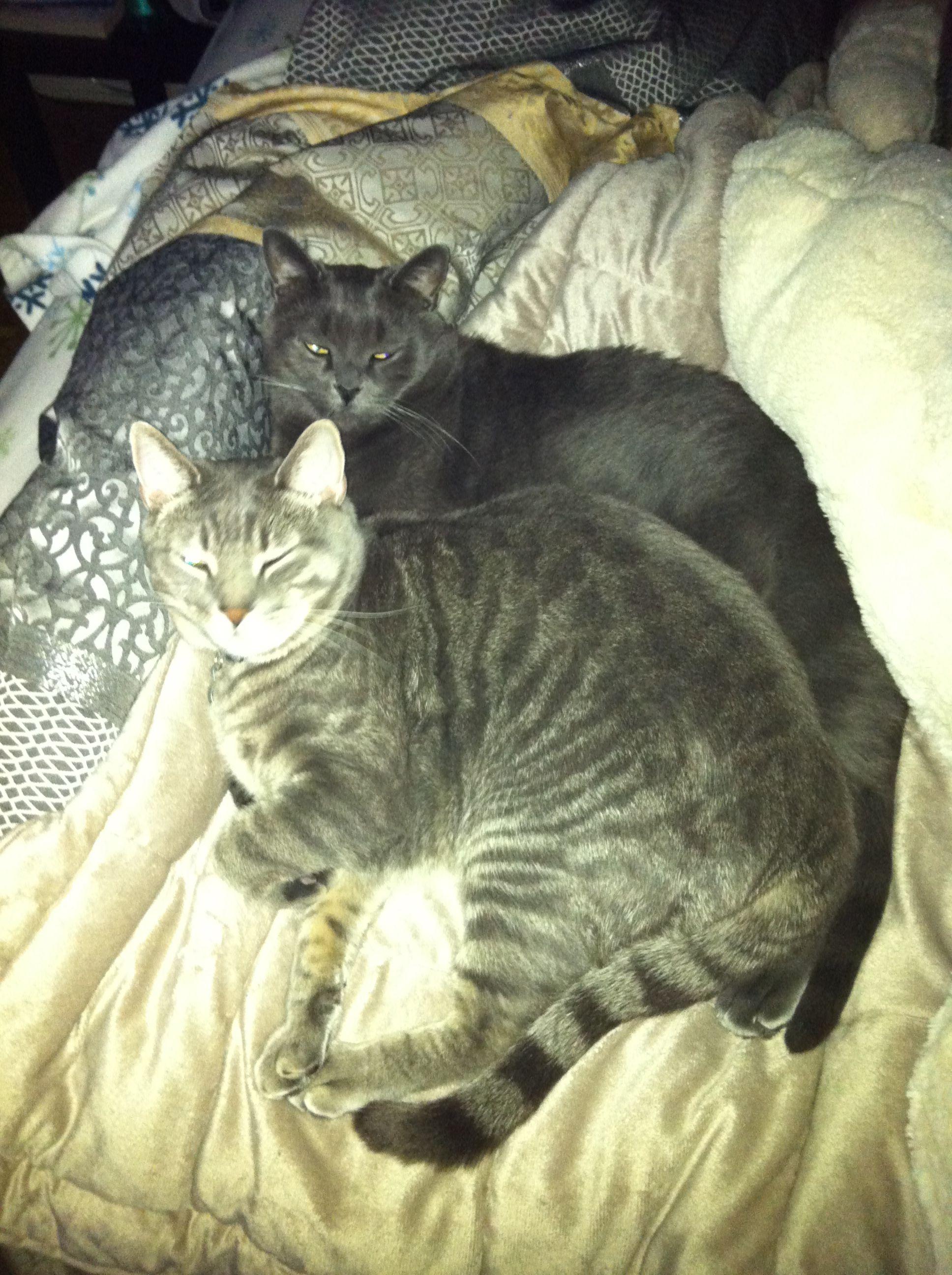 Cats spooning.