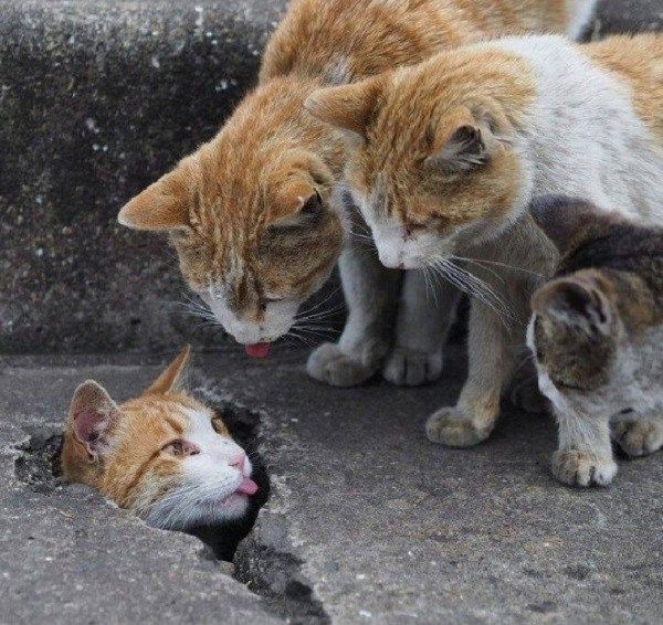 Ten Cats With Their Terrible Friends Who Embarrass Them | Animals ...