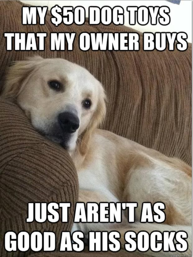 Funny Memes About Life Struggles : Life and times of a dog the struggle is real pics