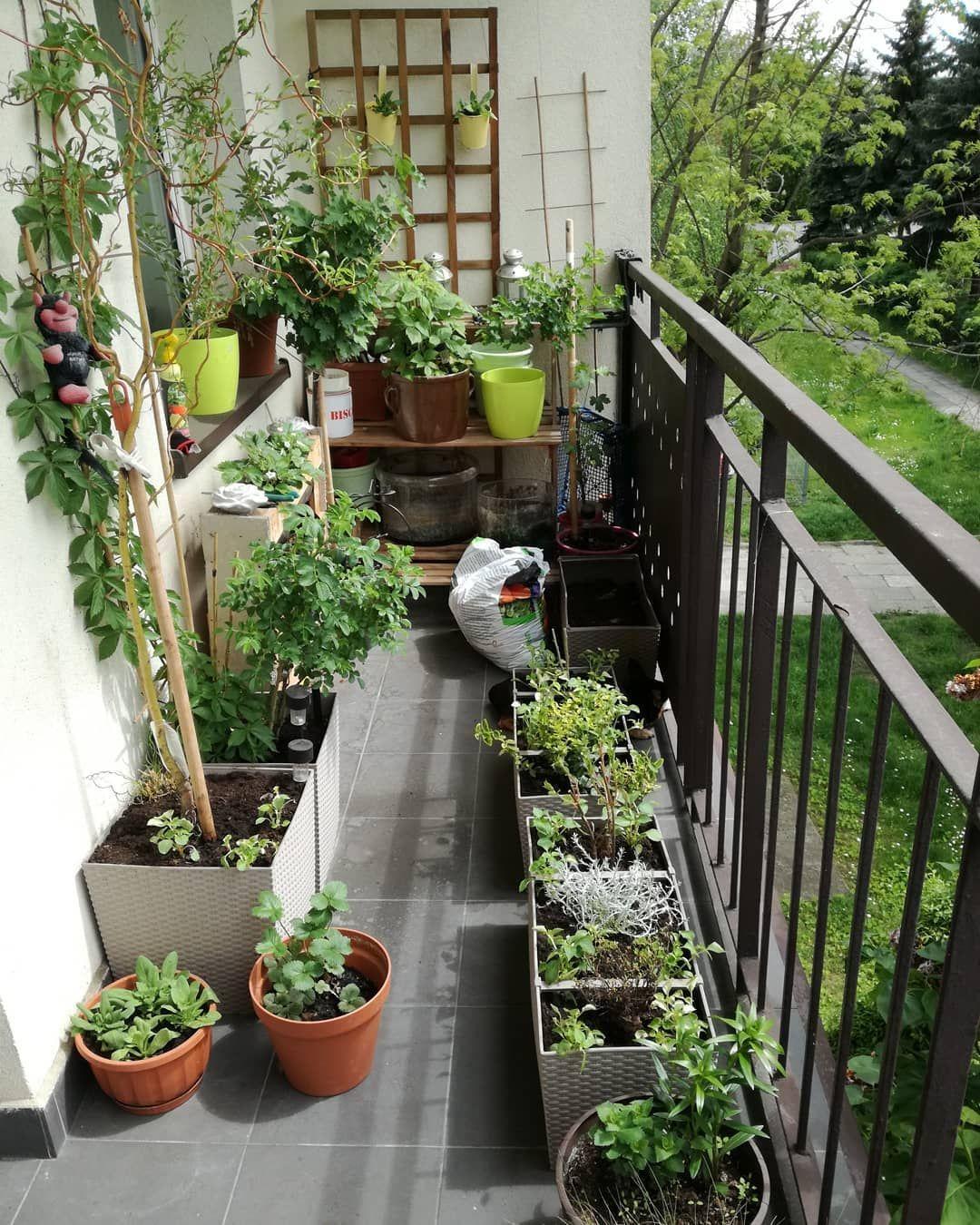 Wiosna Na Balkonie Terrace Garden Balcony Garden Garden