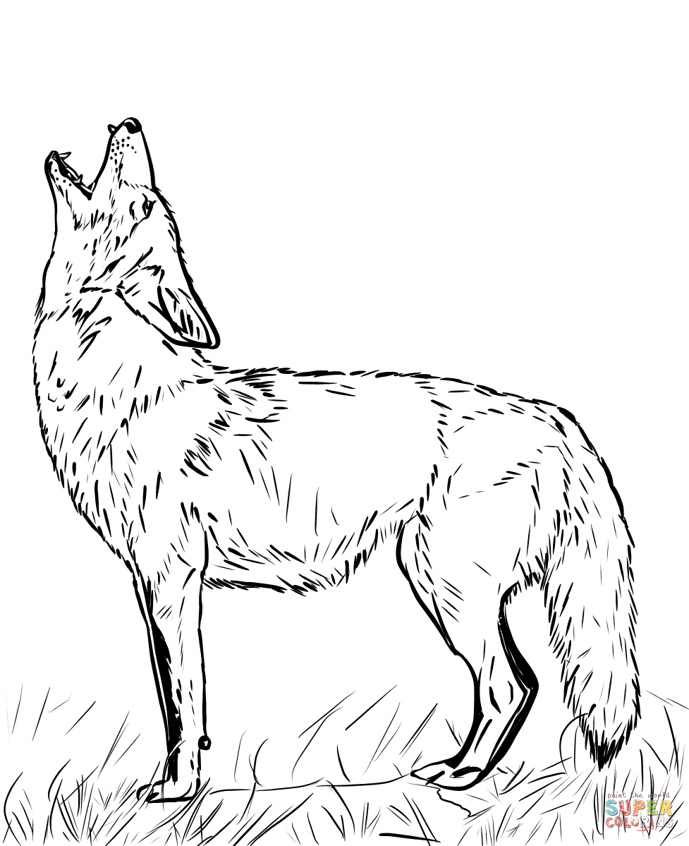 Howling Coyote Coloring Page Free Printable Coloring Pages In 2020 Fox Coloring Page Coloring Pages Coyote Drawing