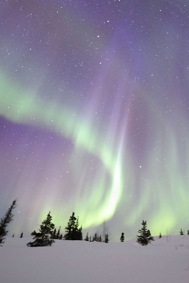 Borealis and Snow I would love to see this just once in my lifetime - new blueprint alberta northern lights
