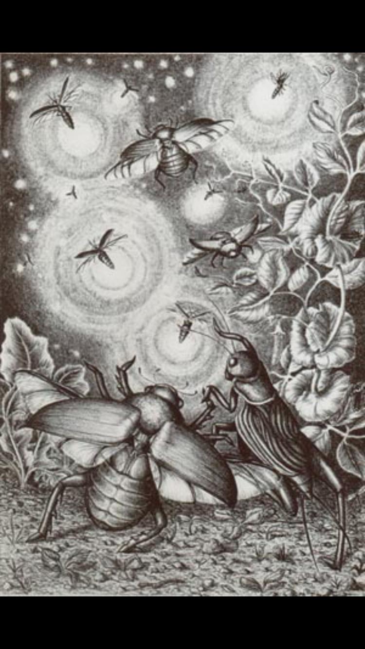 Laura Black Firefly Tattoo: Pin By Chawser Leonard On B - Pretty Bugs {469}