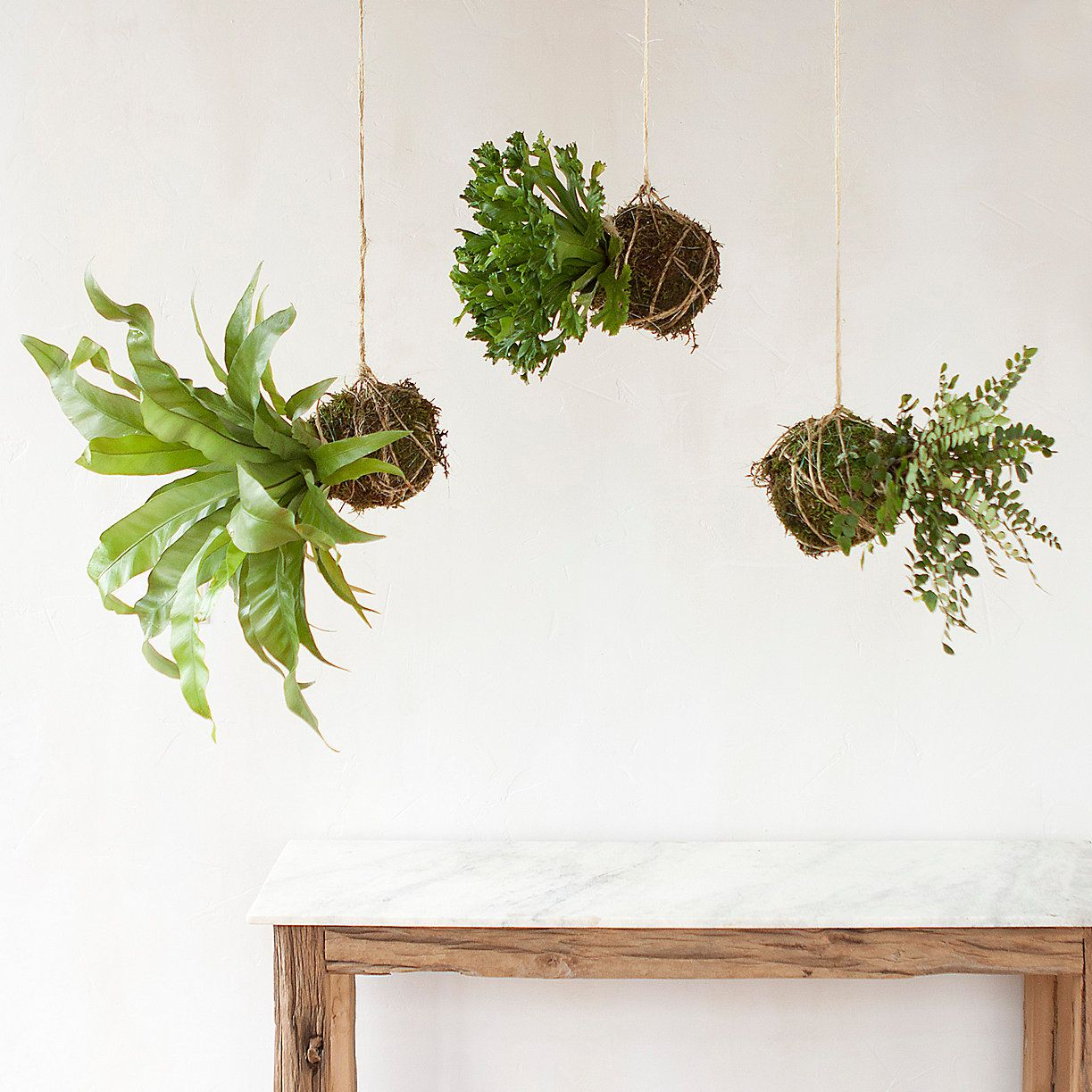 hanging fern string garden trio. Black Bedroom Furniture Sets. Home Design Ideas