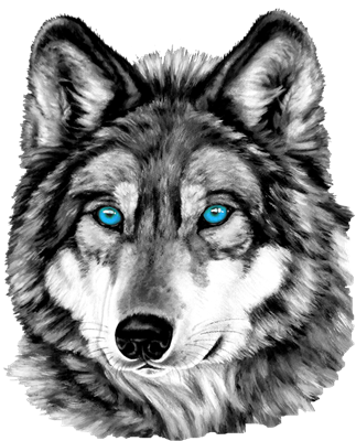 Black wolf with blue eyes drawing - photo#50