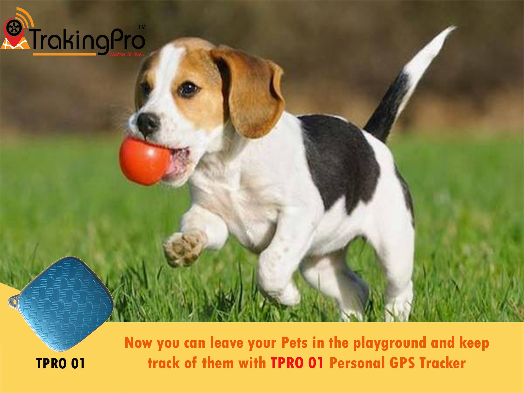 Trakingpro Dogs Dog Names Buy A Dog