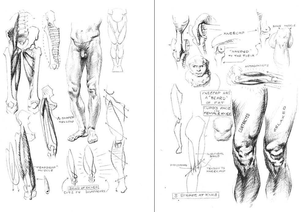 Faces In Knees Stephen Rogers Peck Atlas Of The Human Anatomy