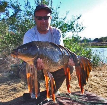 Karl haymer of uscarppromagazine caught this awesome for California freshwater fish