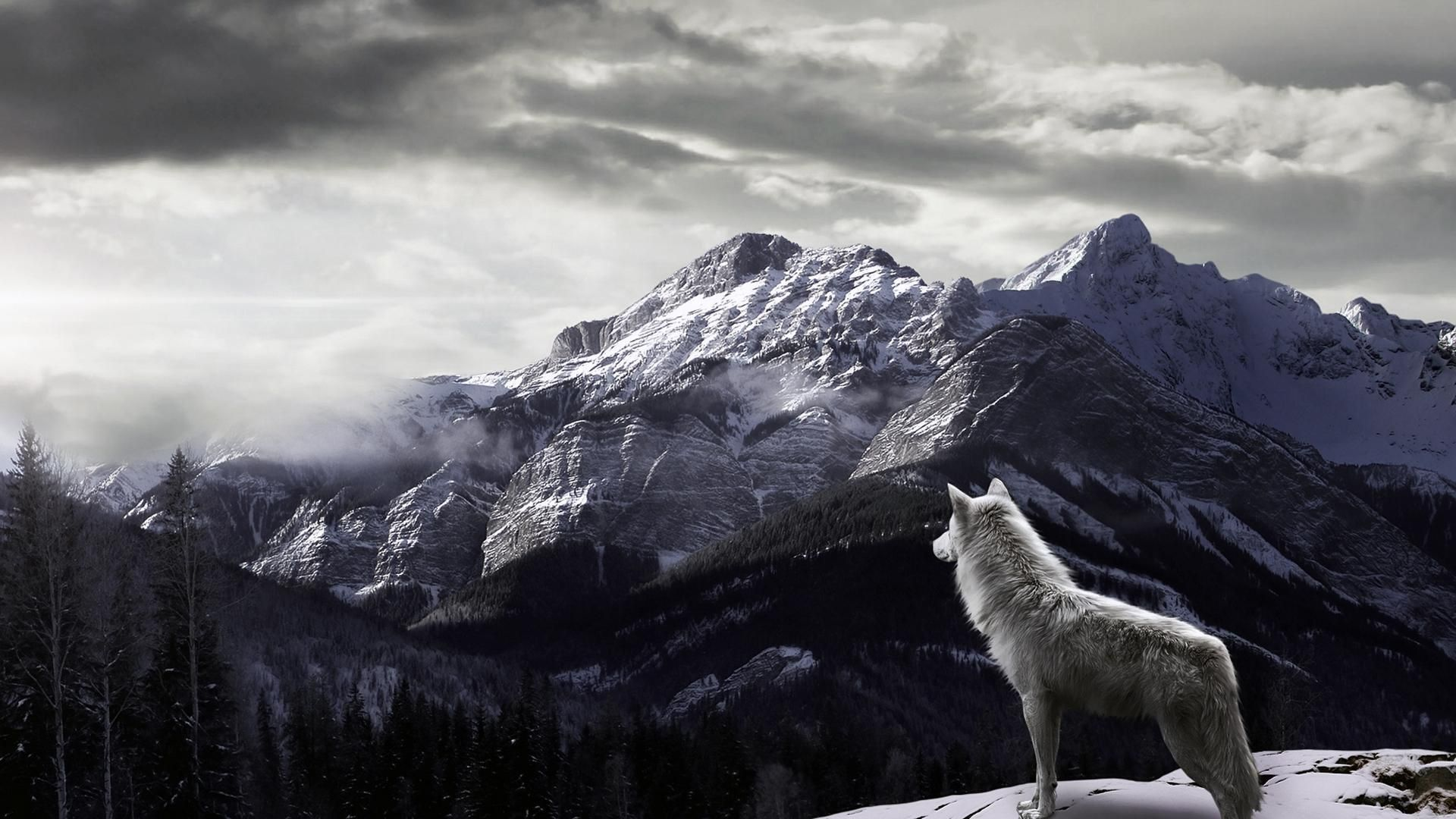 Must see Gray Wolf Wallpaper Mountains - 1938f439d323e233bcbdb45aaa50a4e1  You Should Have_20169.jpg