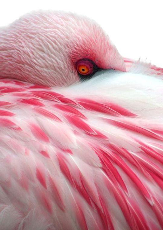 Καυτά και μεγάλο πουλί