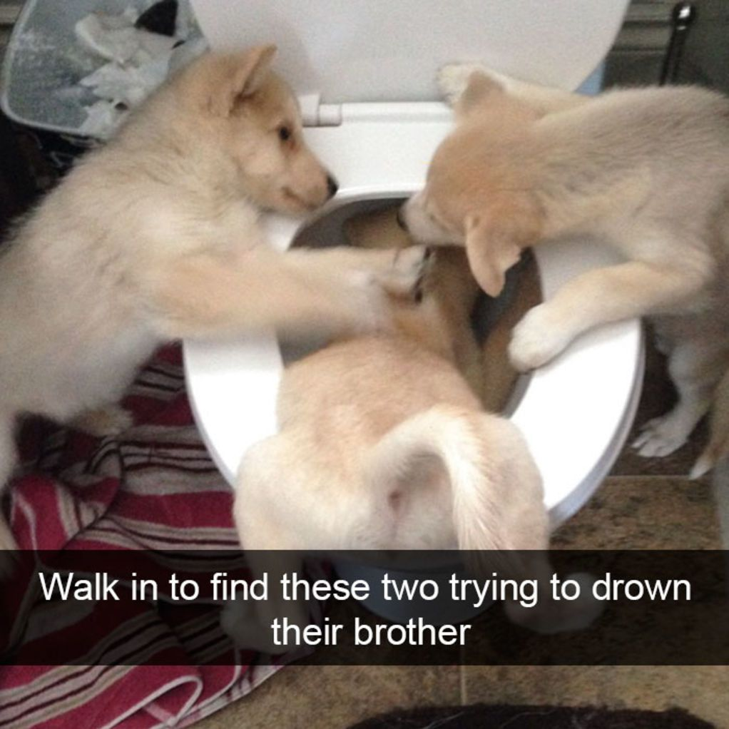 The Funniest Dog Snapchats Of All Time - The 29 funniest dog snapchats of all time
