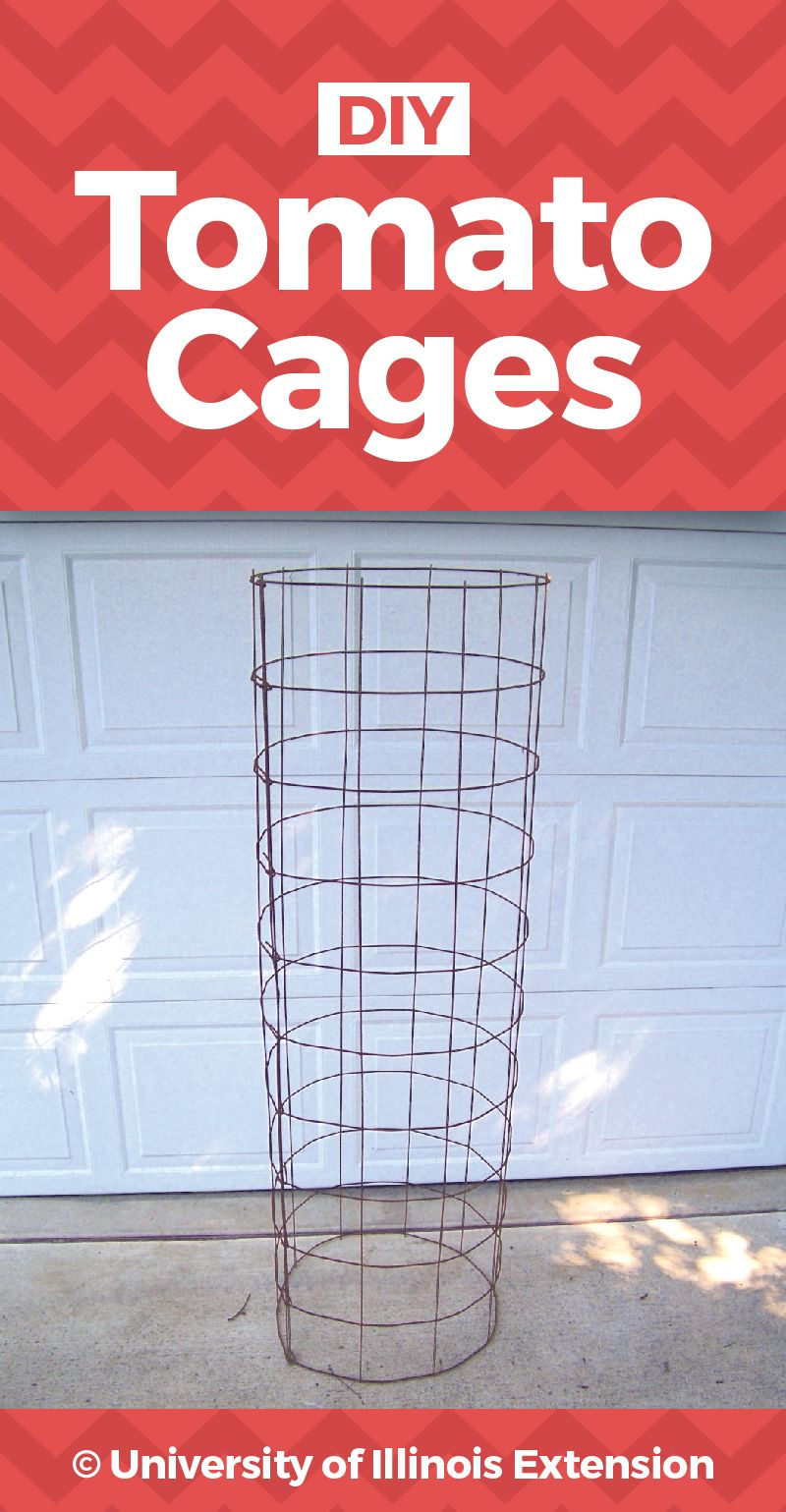 Diy Tomato Cages Pdf With Step By Step Instructions Tomato Cages Vege Garden Ideas Tomato