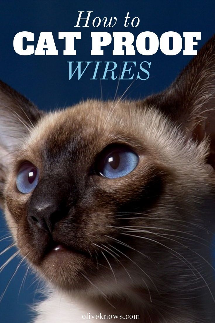 How to Cat Proof Wires OliveKnows Cat training, How to
