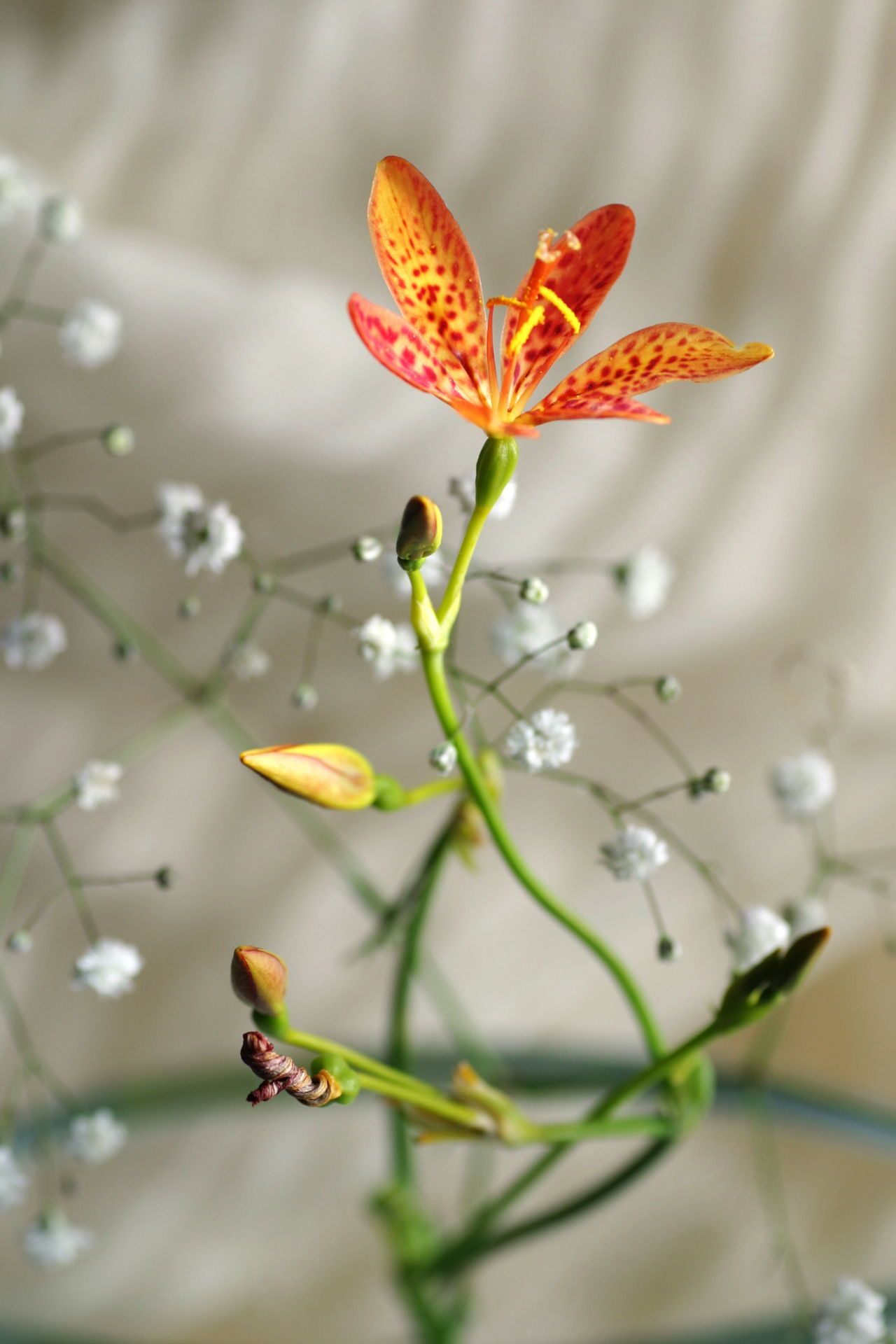 Symbolic Meanings of Flowers That You've Been Wanting to