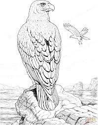 bildergebnis für adler ausmalbild erwachsene | vogel malvorlagen, ausmalbilder, malbuch für