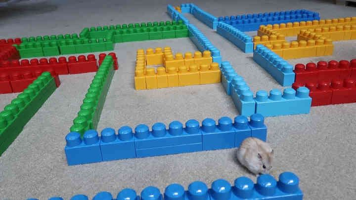 Faze Rug Obstacle Course Maze For My Hamster Do You Think Hammy Found His Way Out Of The Obstacle Course Maze Hamster Diy Hamster Hamsters As Pets