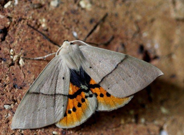 Pin On Insekten