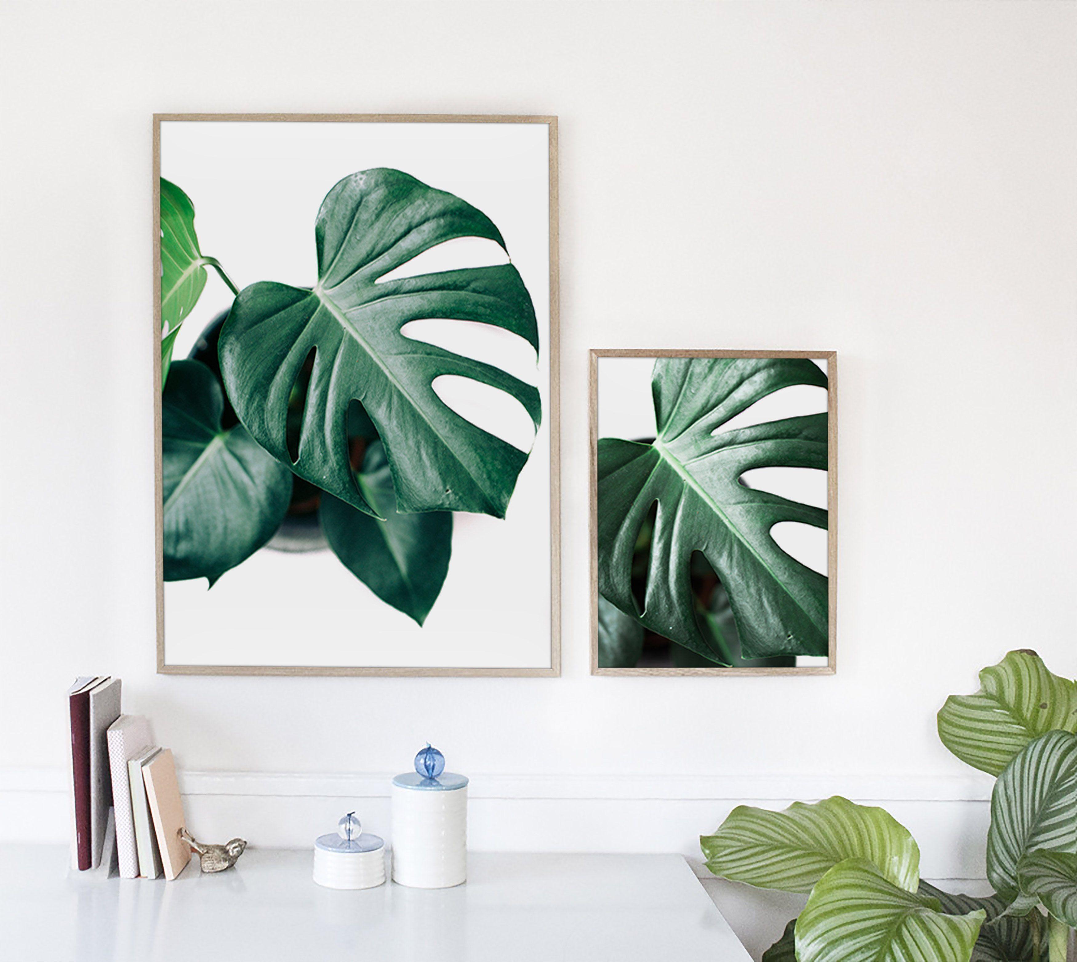European Inspired Home Decor: 4 Green Monstera Stock Photos By Nellaino On