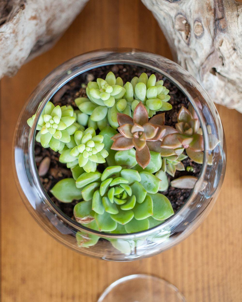 succulent terrarium wedding decor Terrarium wedding