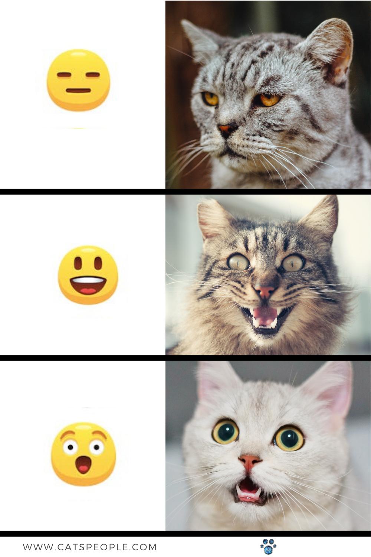 Cat Emojis In 2020 Cats Cat People Cat Paws