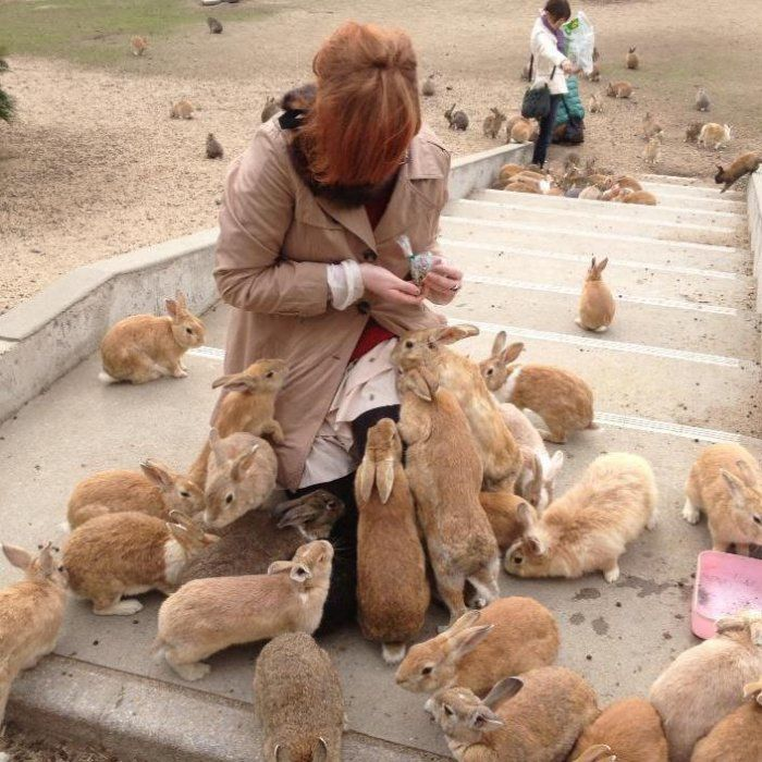 Rabbit Island in Japan Okunosima Rabbit island