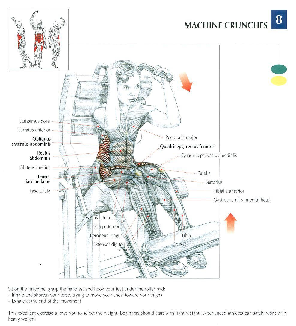 Machine Crunches ~ Repinned by Crossed Irons Fitness