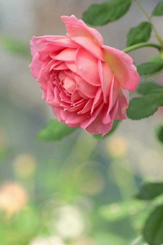 Изображение «Цветочница» от пользователя Σʶ | Красивые ...