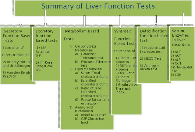 functions of the liver - Google Search | A&P | Pinterest