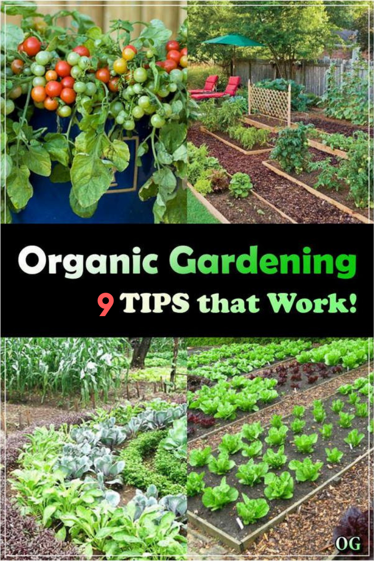 9 Awesome Diy Ideas For Your Garden Gardening For Beginners Organic Gardening Tips Plants