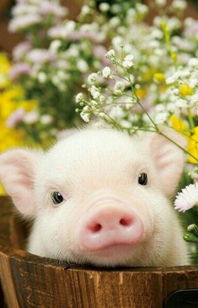 Süße Tierbilder: 150 der süßesten Tiere!
