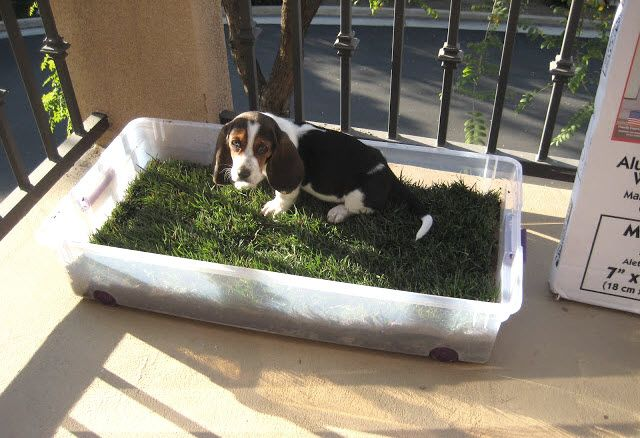 Storage Bin Dog Potty Petdiys Com Dog Potty Area Diy Dog
